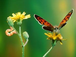 bir-tirtil-ve-bir-kelebek-1683
